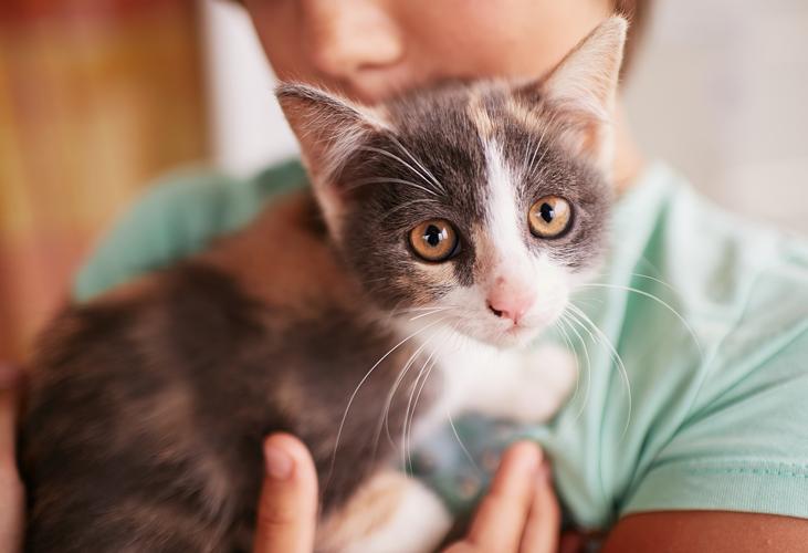 Onder1Dak | Katten en kinderen, een gouden combinatie
